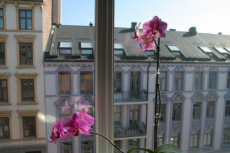 Orchid. Photo: Mittens and Sunglasses © 2018